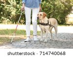 guide dog helping blind woman... | Shutterstock . vector #714740068