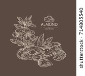 background with almond  almond... | Shutterstock .eps vector #714805540