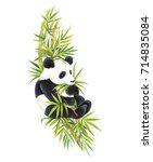 Panda Climbing Bamboo To Eat...
