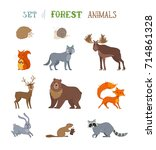 vector set of wild forest... | Shutterstock .eps vector #714861328