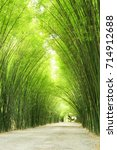 Small photo of Bamboos is the grass family.