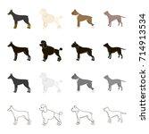 doberman  dog poodle  boxer ... | Shutterstock .eps vector #714913534