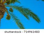 beautiful spreading palm tree...   Shutterstock . vector #714961483