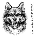 muzzle  wolf's head with bared... | Shutterstock . vector #714977050