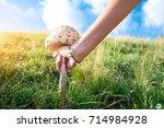 mushroom macrolepiota procera... | Shutterstock . vector #714984928