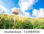 mushroom macrolepiota procera ... | Shutterstock . vector #714984934
