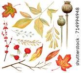 autumn herbarium. red and... | Shutterstock . vector #714994948