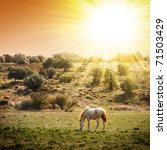 White Horse Pasturing In A...