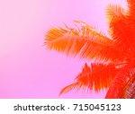 Palm Tree On Sky Background....
