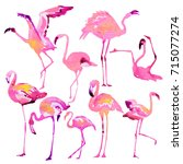 beautiful watercolor flamingos  ... | Shutterstock . vector #715077274