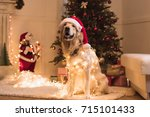 Funny Golden Retriever Dog In...