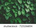 low key green vine leaf dark...