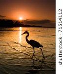 Heron In Mobile Bay