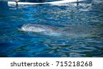 the mouth of a whale shark... | Shutterstock . vector #715218268