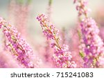 surreal landscape flowering... | Shutterstock . vector #715241083