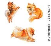 Hand Drawn Fluffy Pomeranian...