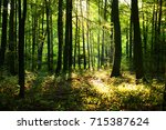 morning in the forest | Shutterstock . vector #715387624