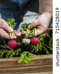 closeup of hand holding beets | Shutterstock . vector #715428019