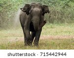Small photo of Elephant Charge