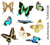Stock photo exotic butterflies collection 71550238