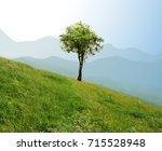 Lonely Tree In A Mountain Slope