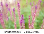 pink blurred flowers background | Shutterstock . vector #715628983