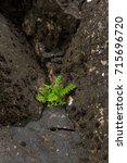 faroe island | Shutterstock . vector #715696720