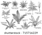 Fern Collection Illustration ...