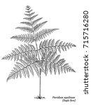 eagle fern illustration ... | Shutterstock .eps vector #715716280