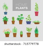 home plants vector set | Shutterstock .eps vector #715779778