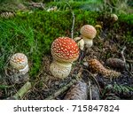Small Young Red Toadstool In...