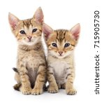 Stock photo two small kittens isolated on white background 715905730