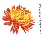 Bright Chrysanthemum....