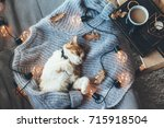 Stock photo lazy cat is sleeping on soft woolen sweater on sofa decorated with led lights winter or autumn 715918504