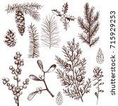 christmas plants set. vector... | Shutterstock .eps vector #715929253