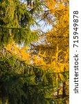 fall colors | Shutterstock . vector #715949878