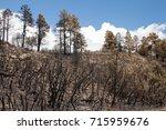 Dead Trees On A Hillside ...