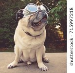 an adorable pug sitting in a... | Shutterstock . vector #715997218