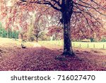 vintage alley in old autumn... | Shutterstock . vector #716027470