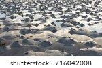 Small photo of Lugworm / sandworm (Arenicola marina) casts at low tide at Norwegian coast