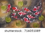Fish  Fancy Carp Watercolor