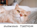 Small photo of Cat interest something. Cat interest something