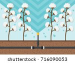 cotton plantation watering flat ... | Shutterstock .eps vector #716090053