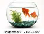 goldfish fishbowl | Shutterstock . vector #716133220