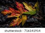 autumn leaf fall | Shutterstock . vector #716141914