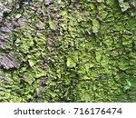 greenish bark of an old tree | Shutterstock . vector #716176474