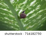 Snail And Leaf  Snail Is A Slo...
