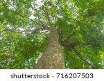 trees sky | Shutterstock . vector #716207503