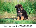puppy | Shutterstock . vector #716232289