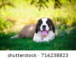 Stock photo puppy 716238823